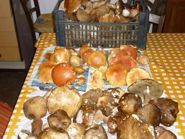 funghi-ovoli-porcini